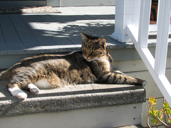 A cat on the steps of his Martinez CA home.